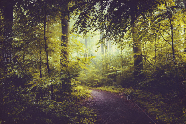 Deciduous forest in summer- forest path and early-morning haze
