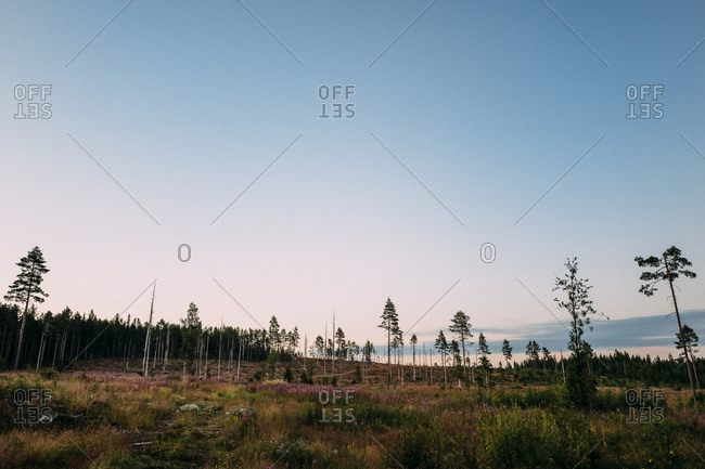 Field on the edge of a forest in Sweden