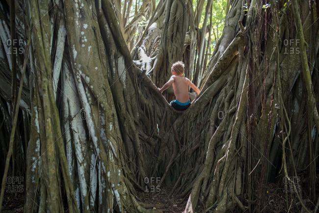 banyan stock photos - OFFSET