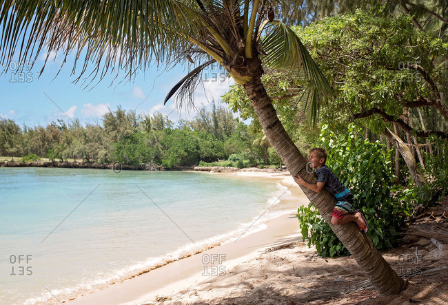 Young boy clinging to the trunk of palm tree on beach