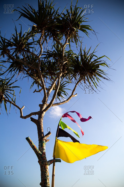 Flags, palm tree and blue sky