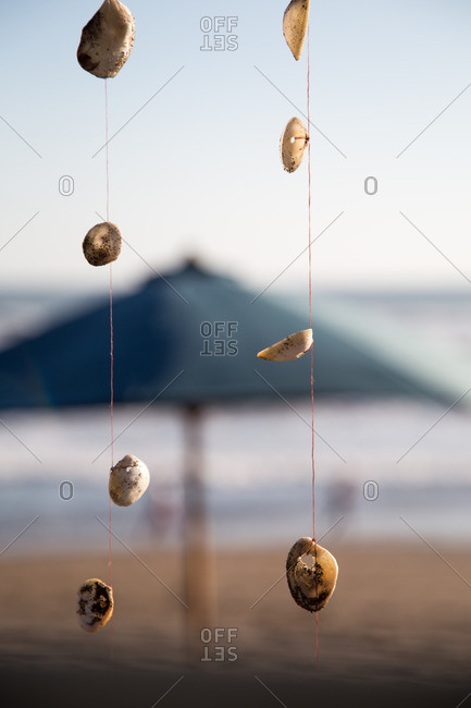 Seashells hanging from threads at beach