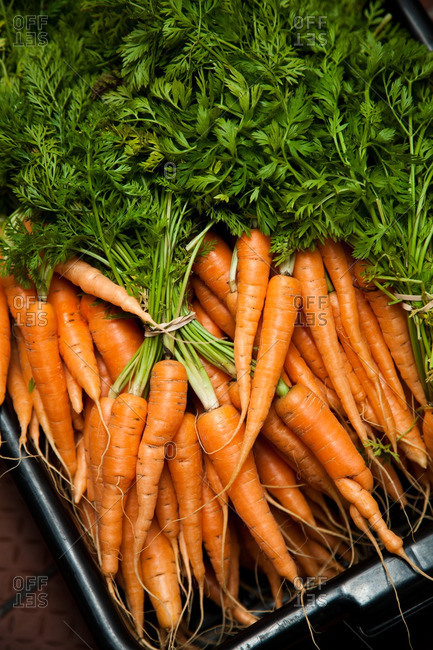 Overhead view of whole, raw carrots