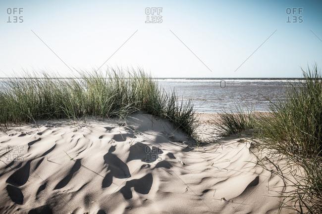 Grassy sand dunes on beach