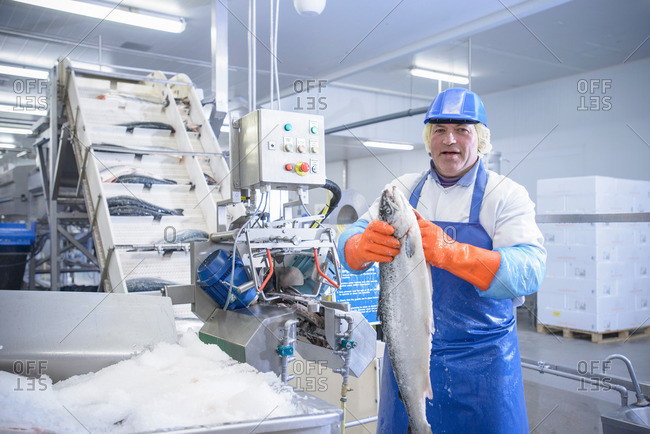 Portrait of worker in food factory holding fresh salmon next to machinery