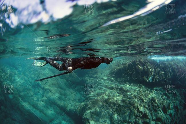 Snorkeler swimming with spearfishing gun