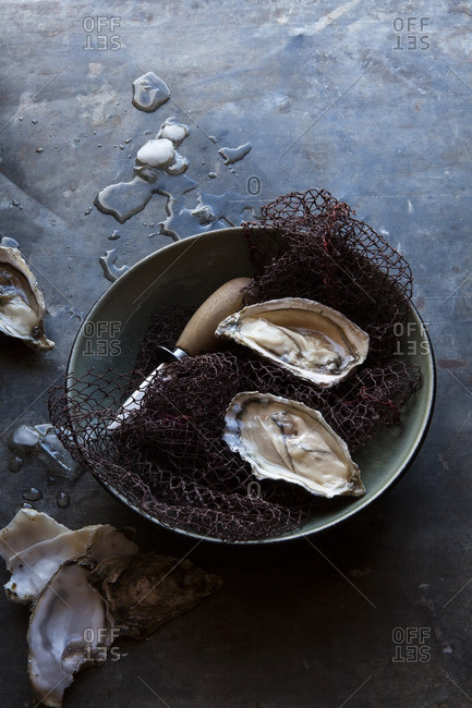 Oysters in a bowl