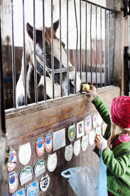 Girl feeding horse in stable