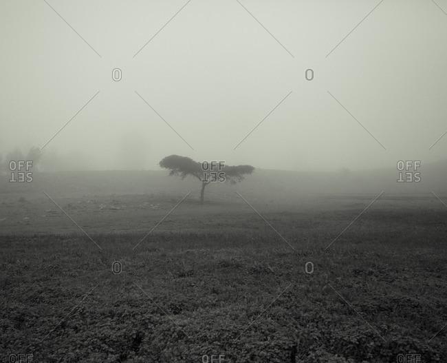 A foggy Ethiopian field