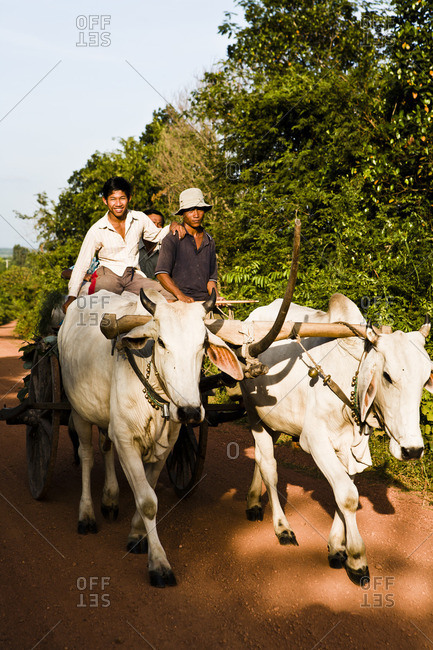 October 2, 2006: Three men hauling pepper harvest using a bullock cart pulled by an oxen team