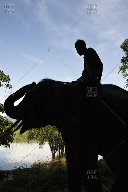 Elephant handler (mahout) sits bareback on an adult elephant