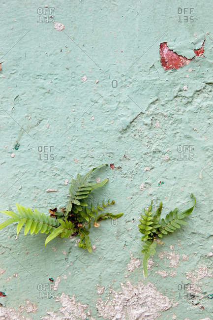 plants growing on wall