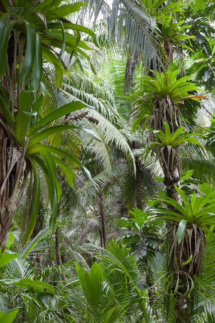 bromeliads growing on palm trees in the jungle