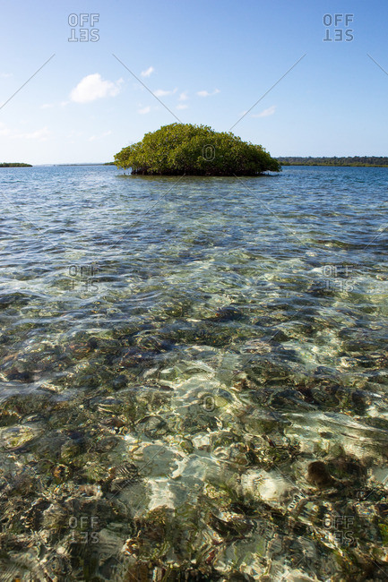 mangrove island in crystal clear water at Bocas del Toro