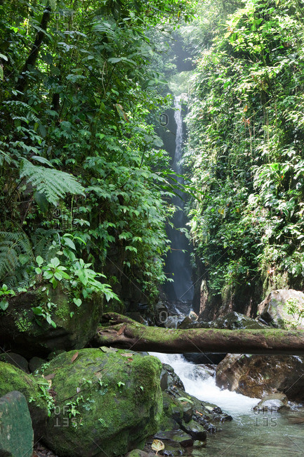 waterfall and stream running through dense rainforest