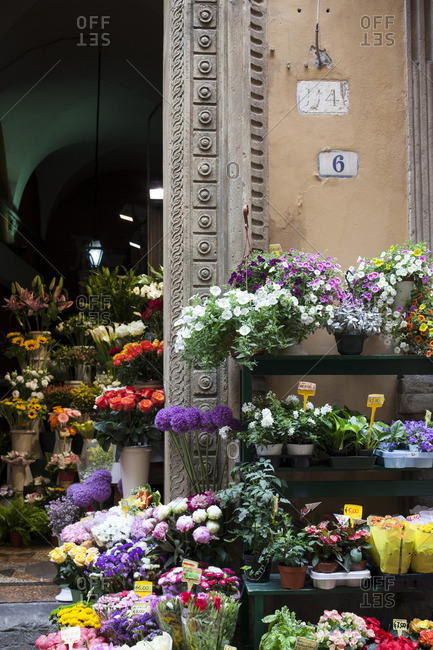 Florist storefront in Bologna, Italy