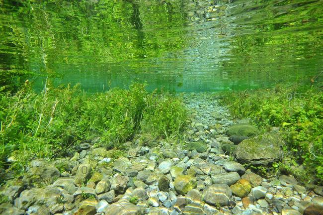 Underwater view of rocks and seaweed