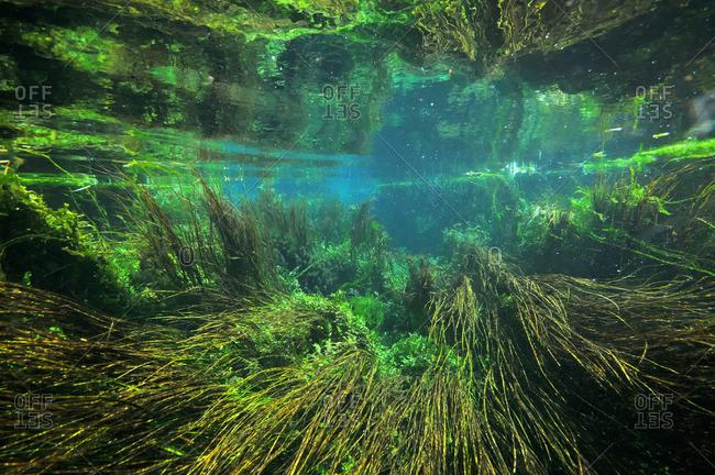 Underwater view of sea grass