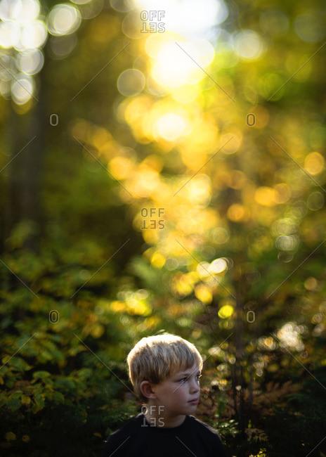 Blonde boy in sunlight woods