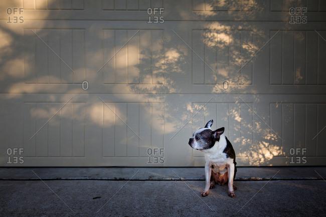 Old dog sitting near a garage door