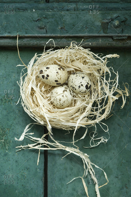 Easter nest with three quail eggs