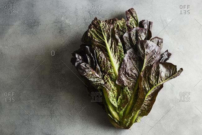Red romaine lettuce on gray background