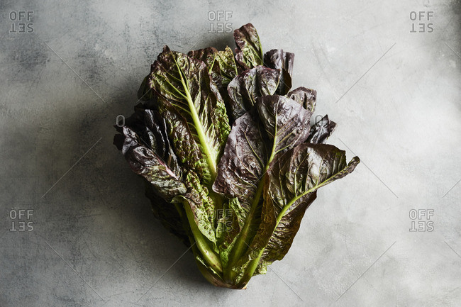 Farm fresh head of red romaine lettuce