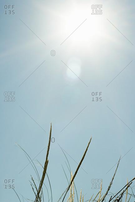 Bright sunlight over sand dunes