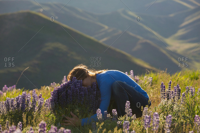 Young woman on a mountainside burying her face in lavender flowers