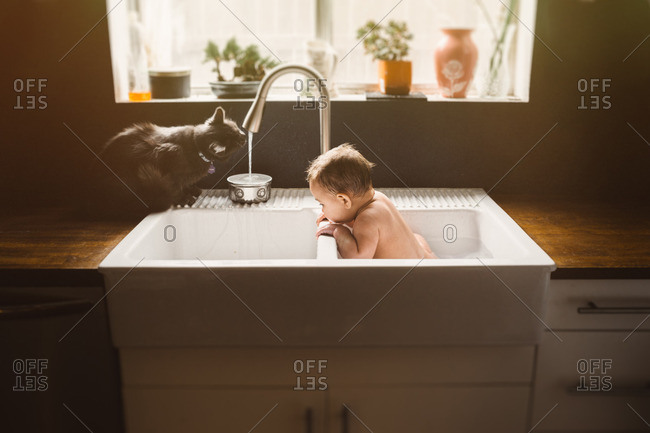 Cat drinks from faucet while baby takes bath in kitchen sink