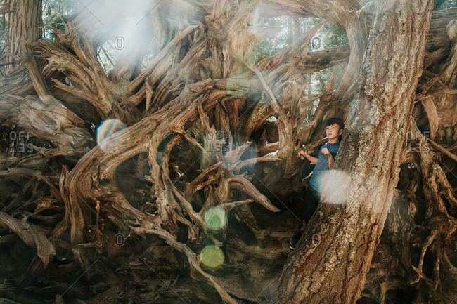 Young boy exploring tangled roots of a fallen tree