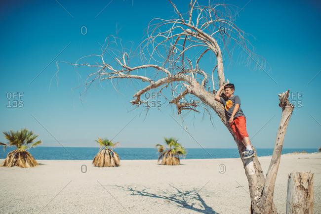 Boy climbing dead tree on beach