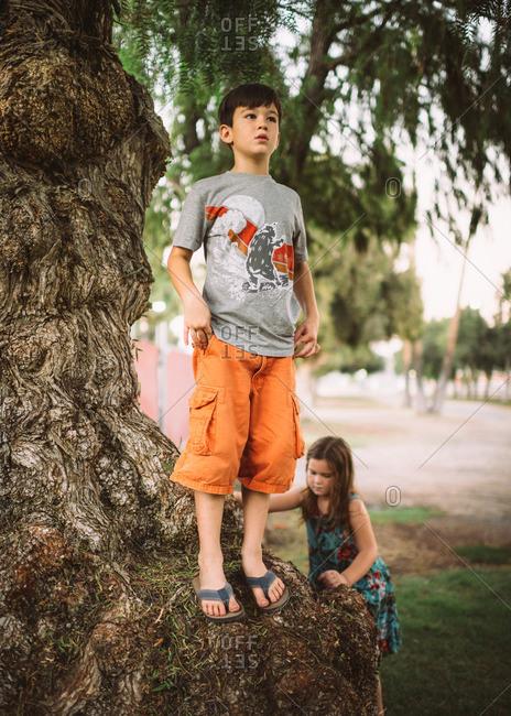 Boy and girl playing at gnarled tree
