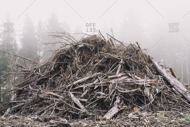 Pile of wood debris from clear cut logging. Mist in the forest.