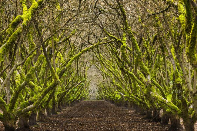 Overgrown orchard, Oregon, USA - Offset