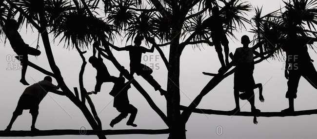 Children playing in a tree in Zanzibar, silhouetted against the sky.