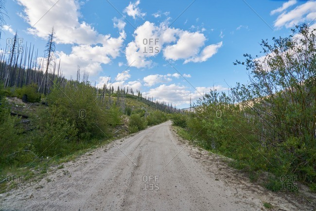 Dirt road through Okanogan-Wenatche National Forest, Washington