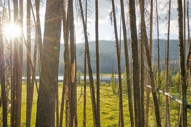 Sunlight streaming through trees in Okanogan-Wenatche National Forest, Washington