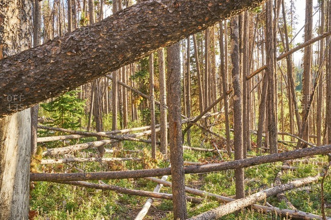 Fallen trees in Okanogan-Wenatche National Forest, Washington