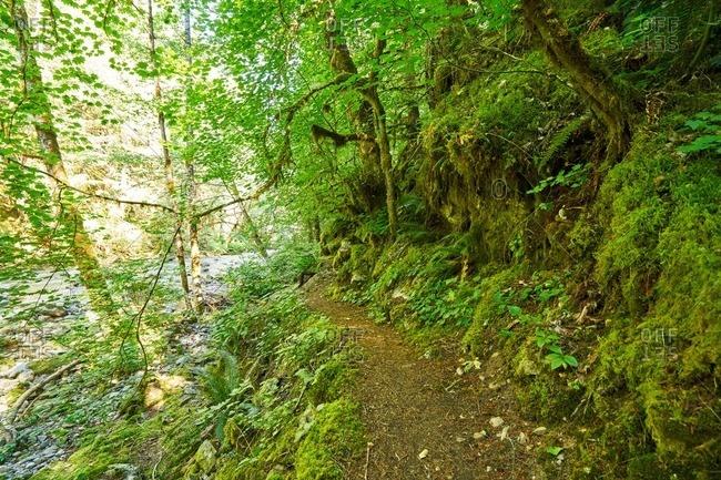 Woodland trail in North Cascades National Park, Washington