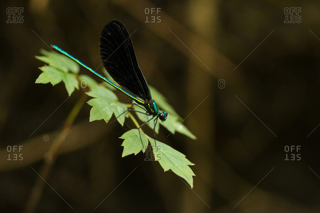 A dragonfly on a leaf