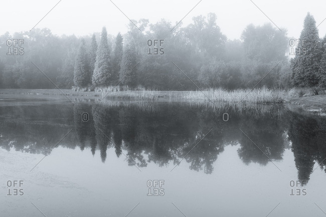 Fog and trees reflected in pond
