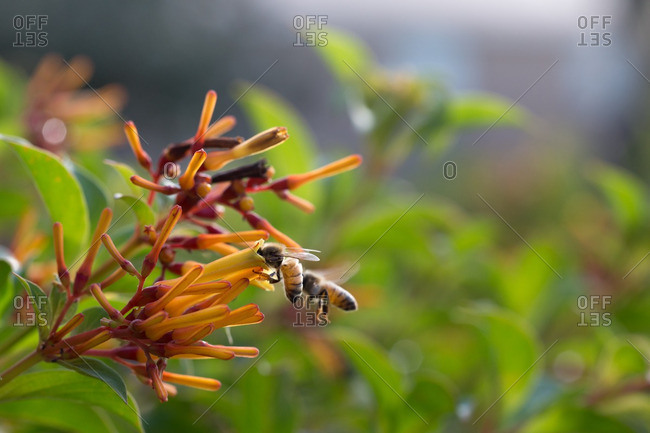 Bees drinking nectar from flower