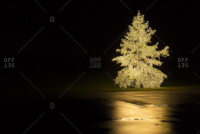 Evergreen tree wrapped with thousands of white twinkle lights