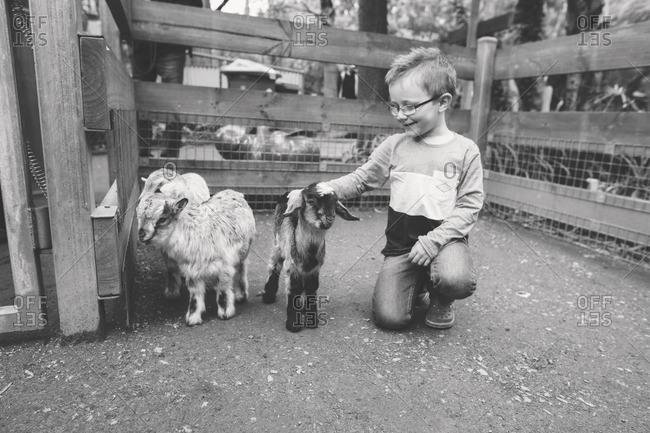 Boy petting animals in a petting zoo