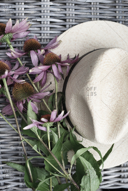 Cone flowers and Panama hat