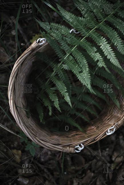 Fern branches in a wicker basket