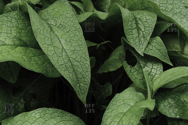 Textured leaves of plant
