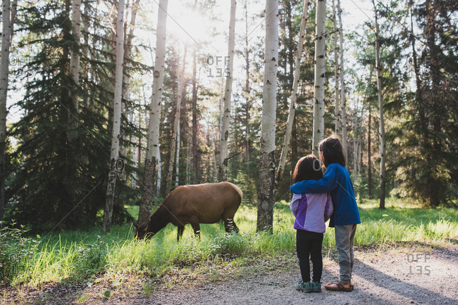 Two sisters watching a female elk in the woods