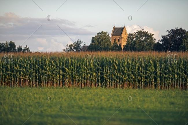 Old church tower over corn field, Geesteren, Achterhoek, Gelderland, The Netherlands
